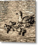 Baby Ducks - Sepia Metal Print