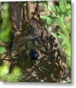 Baby Eastern Cottontail Rabbit Dmam011 Metal Print