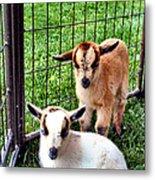 Baby Goats Metal Print