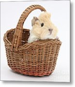 Baby Guinea Pig In A Wicker Basket Metal Print