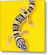 Baby Leopard Gecko Metal Print