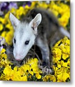 Baby Opossum In Flowers Metal Print