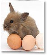 Baby Rabbit With Eggs Metal Print