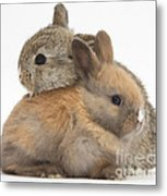 Baby Rabbits Metal Print