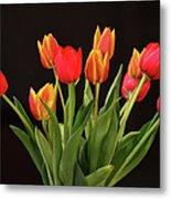 Baby Tulips Metal Print