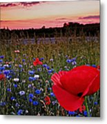 Bachelor Buttons And Poppies Metal Print