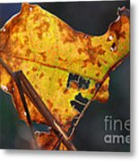 Back-lit Golden Leaf Metal Print