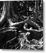 Back To My Roots Metal Print