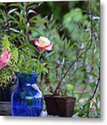 Back Yard Roses Metal Print