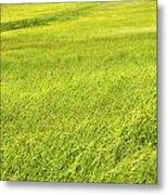 Background Of Green Summer Hay Field In Maine Metal Print