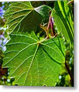 Backlit Leaves Metal Print
