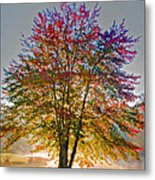 Backlit Maple In Autumn's Light Metal Print