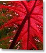 Backlit Red Leaf Metal Print