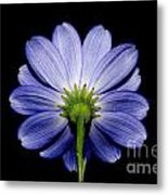 Backside Of A Blue Flower Metal Print