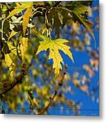 Backyard Leaves Metal Print