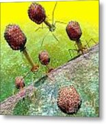 Bacteriophage T4 Virus Group 2 Metal Print by Russell Kightley