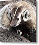Badger - 0007 Metal Print