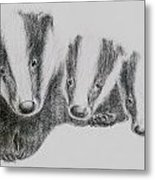 Badgers Metal Print by Lucy D
