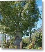 Balboa Tree Metal Print
