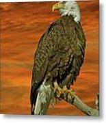 Bald Eagle At Sunrise Metal Print