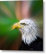 Bald Eagle Color  Metal Print