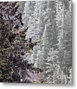 Bald Eagle In Tree Metal Print