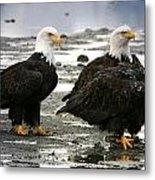 Bald Eagle Trio Metal Print