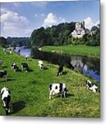 Ballyhooley, Co Cork, Ireland Friesian Metal Print