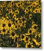 Balsamroot Field In Grand Teton Metal Print