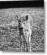Bambi In Black And White Metal Print