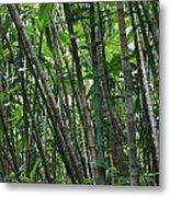 Bamboo 2 Metal Print