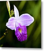 Bamboo Orchid Metal Print