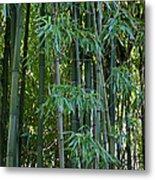 Bamboo Tree Metal Print by Athena Mckinzie