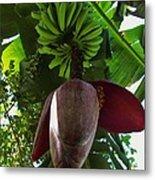 Banana Bloom Metal Print
