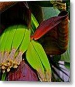Banana Plant I Metal Print