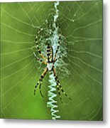 Banana Spider With Web Metal Print