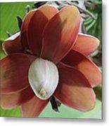 Banana Tree Blossom Metal Print