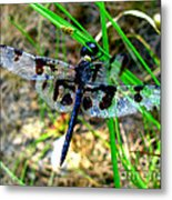 Banded Pennant Dragonfly Metal Print