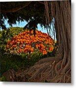 Banyan And Poinciana Trees Metal Print