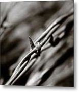 Barbbed Wire 1 Metal Print