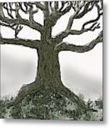 Bare Branches I Metal Print