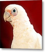 Bare Eyed Cockatoo Metal Print
