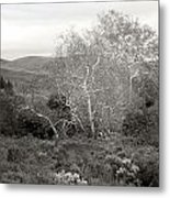 Bare Garden In The Hills Metal Print