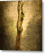 Bare Tree Metal Print by Svetlana Sewell