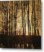Fall Trees On A Lake Metal Print