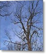 Bare Trees With Blue Sky Metal Print