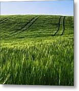 Barley, Co Down Metal Print