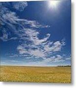 Barley Field Near Airdrie, Alberta Metal Print