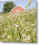 Barn On A Grass Slope Metal Print by Shannon Fagan