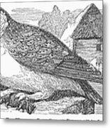 Barn Owl, 1877 Metal Print